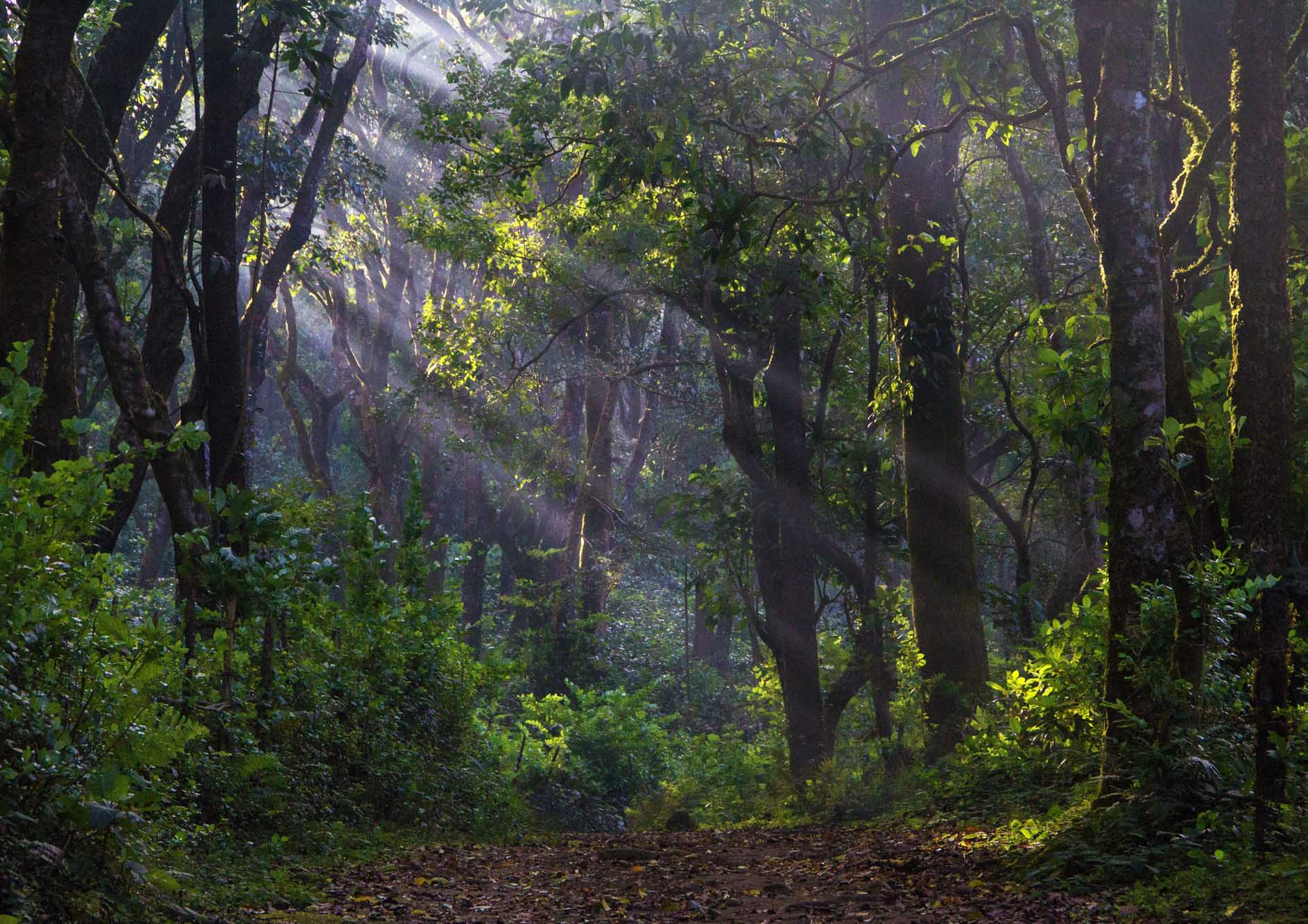 beautiful-forest-view-with-sunrise