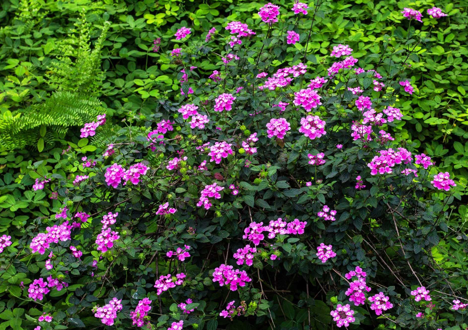 beautiful-wild-flower