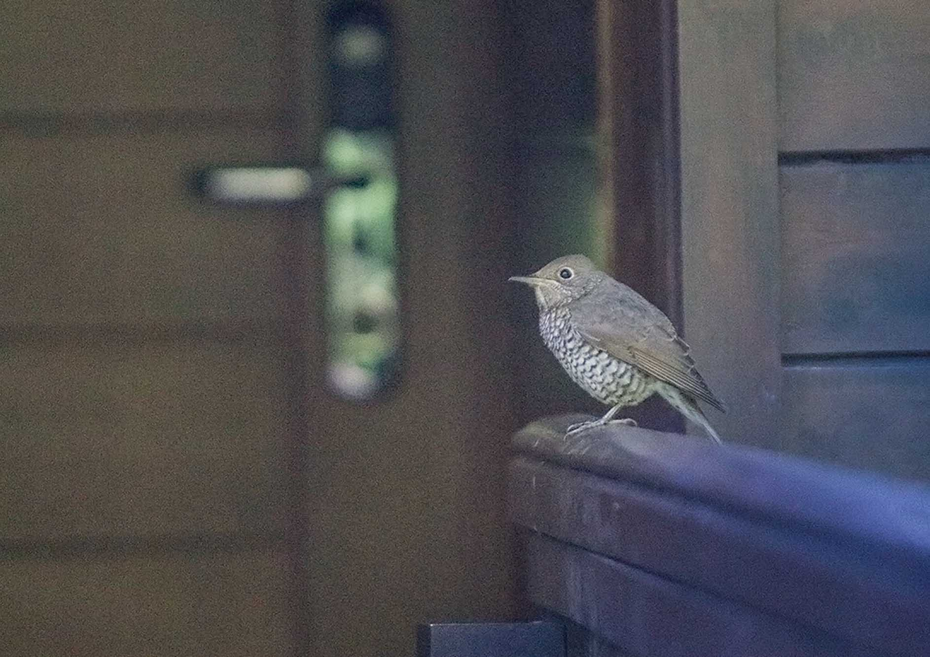 beautiful-bird-at-the-tamara-coorg
