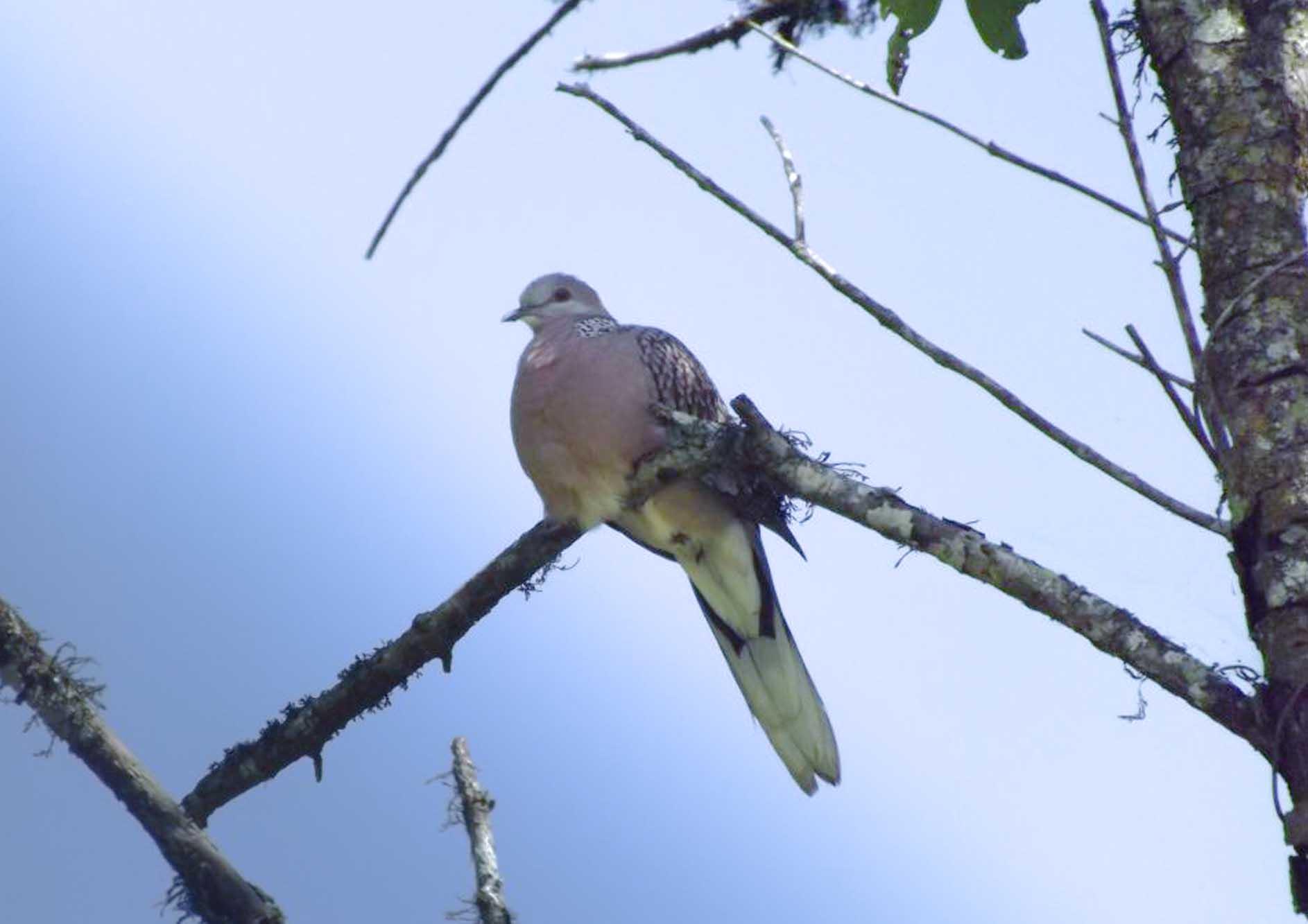 unique-bird-seating-on-tree