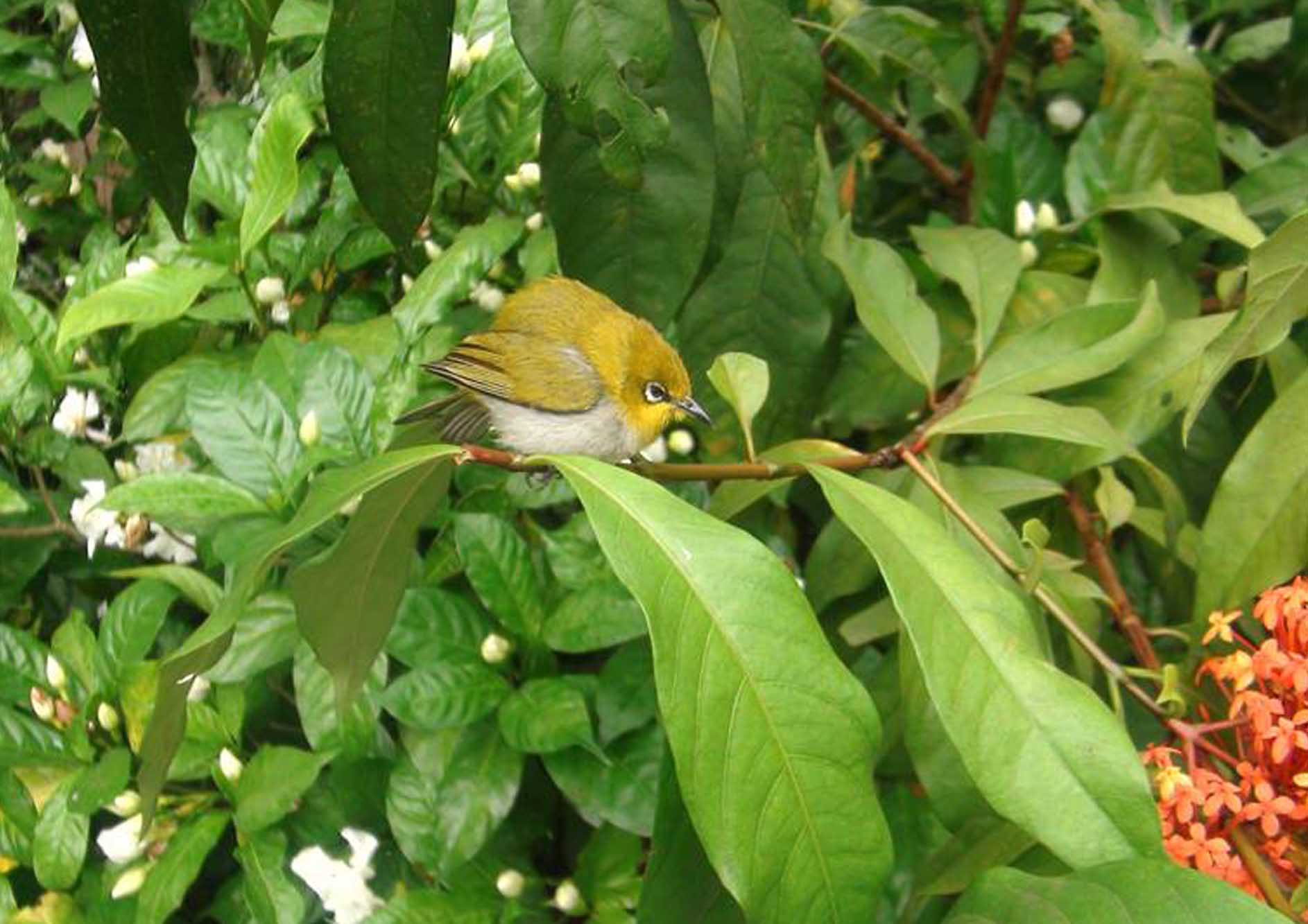 unique-bird-watching-at-the-tamara-coorg