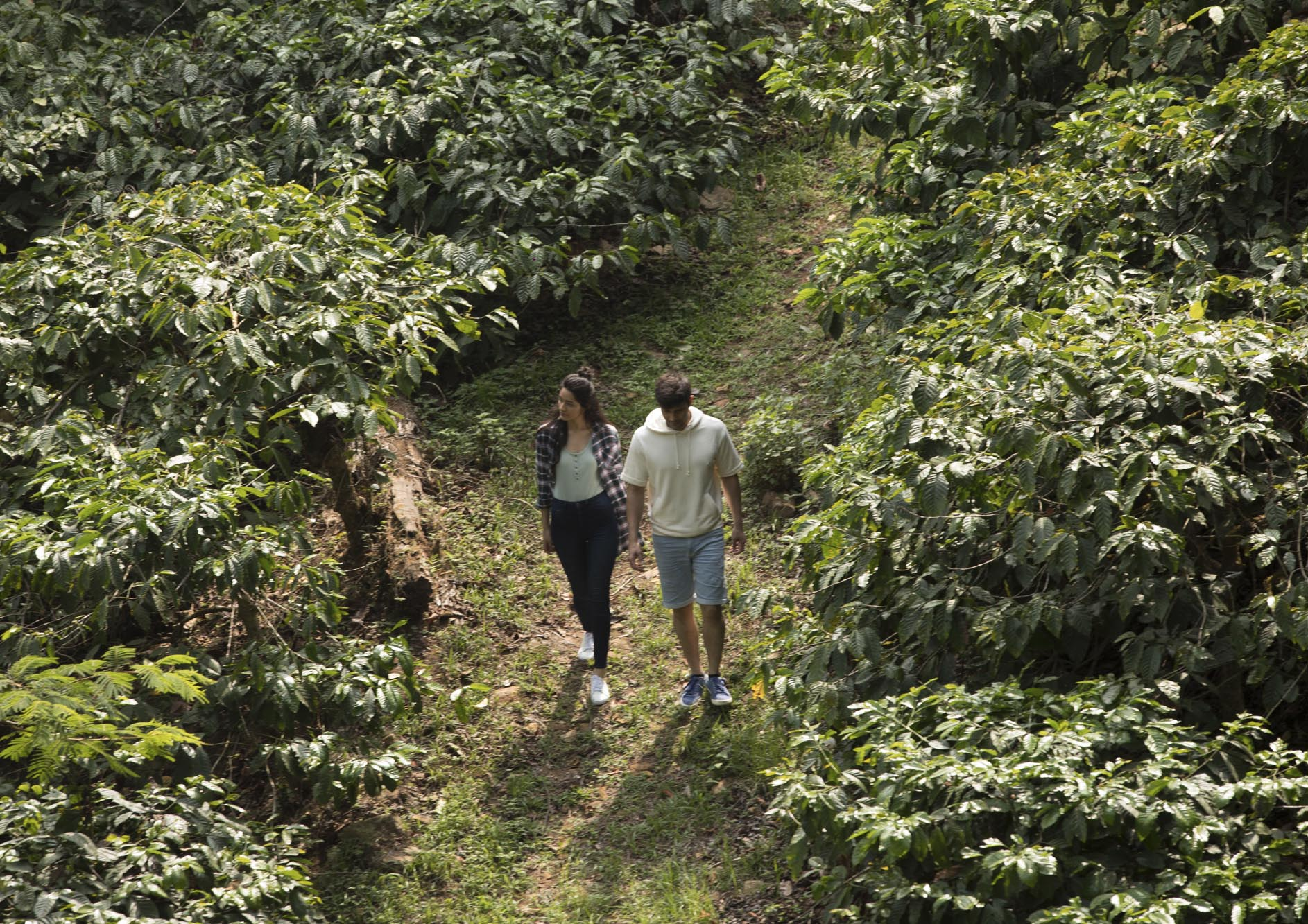 Young-couple-walking-in-the-coffee-farm